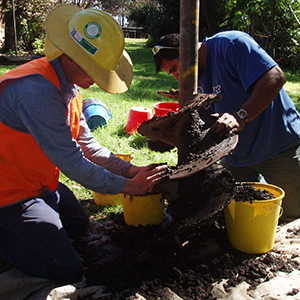 Test excavation